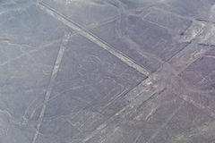 Linee di Nazca - il pappagallo Fotografia Stock