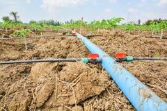 Linee di tubatura di plastica per consegnare acqua nelle piantagioni della manioca Immagini Stock Libere da Diritti