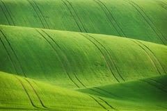Linee e campi delle onde Fotografie Stock Libere da Diritti