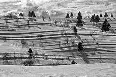 Linee ed alberi Fotografia Stock