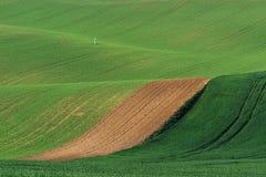 Linee ed onde con gli alberi in primavera, la Moravia del sud, R ceca Immagini Stock Libere da Diritti