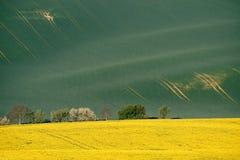 Linee ed onde con gli alberi in primavera, la Moravia del sud, R ceca Fotografie Stock