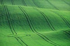 Linee ed onde con gli alberi in primavera, la Moravia del sud, R ceca Immagine Stock Libera da Diritti