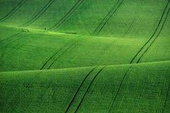 Linee ed onde con gli alberi in primavera, la Moravia del sud, R ceca Immagini Stock