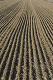 Linee parallele di campo coltivato Fotografia Stock Libera da Diritti