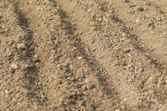 Linee per la semina dei semi in Fiore-letti di verdure Immagine Stock