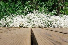 Linee principali della plancia di legno dell'erba del fiore del fiore bianco Immagine Stock