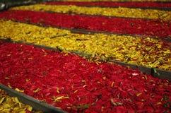 Linee rosse e gialle di trucioli Fotografia Stock