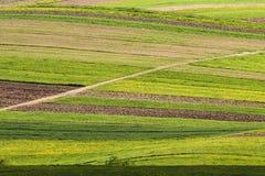 Linee verde Fotografie Stock