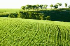 Linee Verde in un campo Immagini Stock