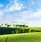 Linee Verde in un campo Fotografia Stock Libera da Diritti