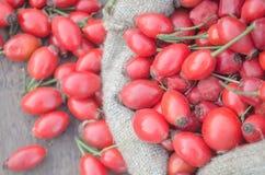 Linen сумка с ягодами плода шиповника Стоковое фото RF