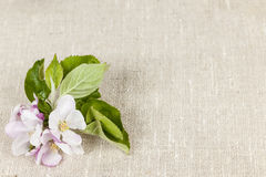 Linen background with apple blossom Stock Image