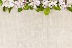 Linen background with apple blossoms Stock Photos