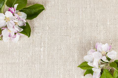 Linen background with apple blossoms. Natural linen background with spring apple blossom flowers Stock Images