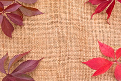 Linen background with leaves Stock Image
