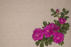 Linen background 3 Royalty Free Stock Images