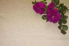 Linen background 1 Stock Image