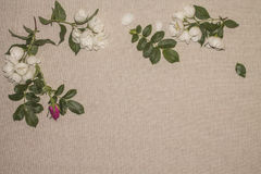 Linen background 8 Stock Photography