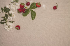 Linen background 14 Royalty Free Stock Images