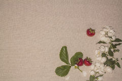 Linen background 13 Stock Photography