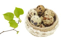 Linen crochet lace basket with Easter eggs isolated on white background. Spring linden tree branch with green leaves and buds and Stock Image
