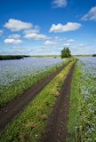 The road going through the fields of flowering flax, blue sky, blue flowers. stock photo