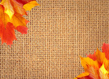 Linen texture background with autumn maple leaves Royalty Free Stock Photo