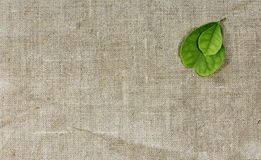 Linen texture. With green leaf lemon Stock Photography