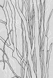 Lines. Organic lines like limbs or trees Royalty Free Stock Photo