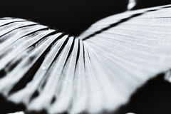 Lines abstract image of Palm Royalty Free Stock Photos