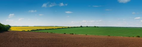 Lines of arable land and rapeflowerfield. Landscape Royalty Free Stock Photography