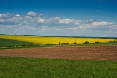 Lines of land and rapeflowerfield landscape panoramic view. Lines of arable land and rapeflowerfield landscape panoramic view Royalty Free Stock Image