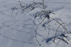 Lines of barbed wire in the snow. Royalty Free Stock Photography