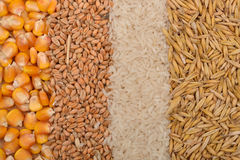 Lines of beans of dried corn, oats, rice and wheat lying on jute Royalty Free Stock Photos