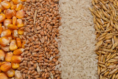 Lines of beans of dried corn, oats, rice and wheat lying on jute Stock Photo