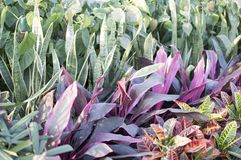 Lines of colorful plants and leaves Royalty Free Stock Photography