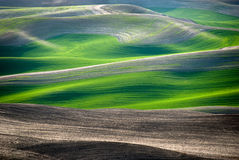 Lines and Curves. Reflect the evening light in the Palouse of eastern Washington Royalty Free Stock Photo