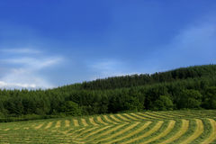 Lines and Curves of Hay royalty free stock image