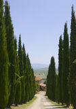 Lines of cypress Stock Photos