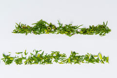 Lines of different herbs Royalty Free Stock Photos