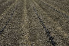 Lines of dripping irrigation over the  plants or vegetables bedd. View of soil and water drop spots from the dripping line irrigation which made for plants or Royalty Free Stock Photography