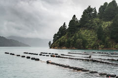 Lines of floaters of mussel farm, New Zealand. Royalty Free Stock Photo