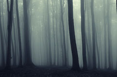 Lines in the forest vreated by beech trees royalty free stock photography