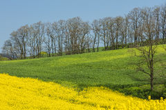 Lines of green and yellow fields under sky Stock Photo