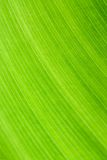 Lines of leaf Royalty Free Stock Photography