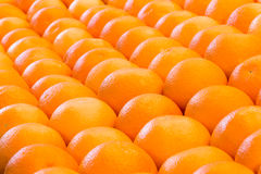 Lines of many oranges in rows Stock Images