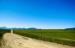 lines naturen Arkivbilder