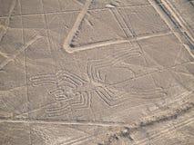lines nazca Fotografering för Bildbyråer