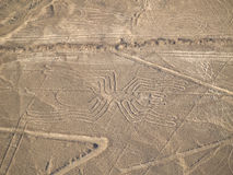lines nazca Arkivfoto